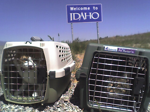 Aussie and Sammie made it to Idaho!
