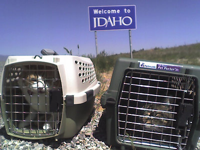 Cat Travels
