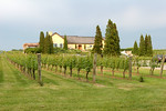 "<a href=""http://www.wolffer.com/store/"">Wolffer Estate Vineyard</a>"