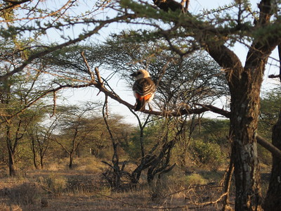 Bird life in Samburu - Kimberly Collins