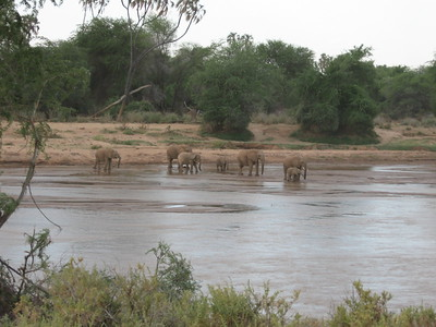Elephants at water in Samburu - Kimberly Collins