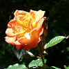 06-05-26 Orange Climber