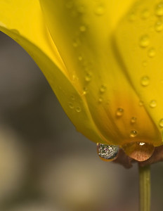 Now look more closely at the bottom dewdrop - detail in the next photo. Chris was the mastermind for this one.