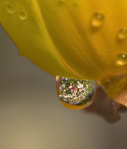 "Yes, there is a whole world in that dewdrop. Click on the ""L"" or ""O"" photo size to see more. (No Photoshop - I swear!)"