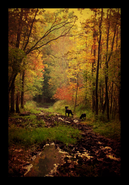 Upon Wandering With Dogs in the Forest
