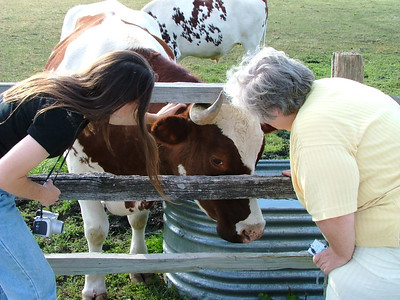 Kristina and Mom playing with an ox.  This is when Kristina decides she wants an ox.