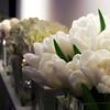 New Year Tulips