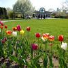 Tulip row & Info Center