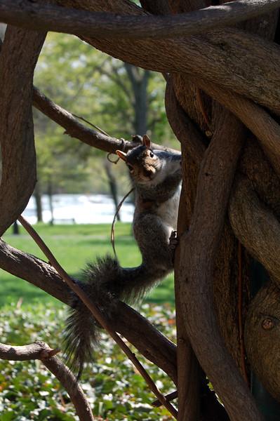 The squirrel poses