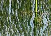 Sun 11-19-06 Reeds at Armida Winery