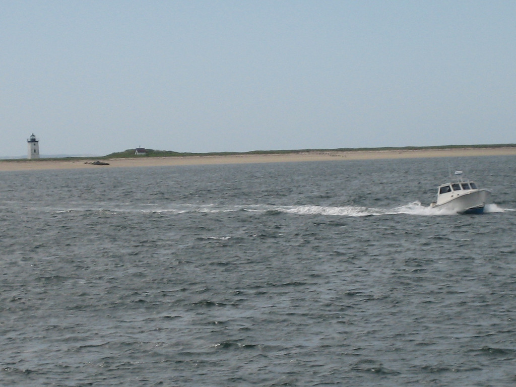 View from the Whale Watch.