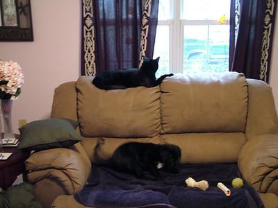 Pets 2006