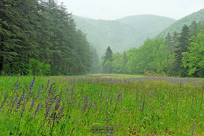 Prairie vers l'Auberge des Dauphins (Forêt de Saou)