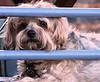 Tue 06-09-19 Puppy