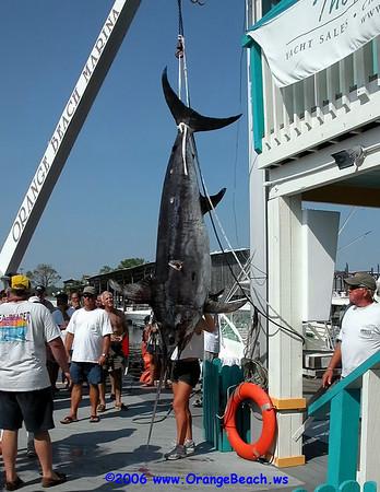 2006-09-16-Alabama Record Swordfish