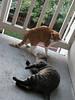 Hah hah!! I got the catnip clump!