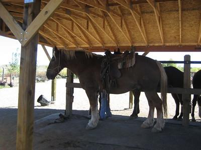 Sydney's Horse Back Riding Gift 2006 September