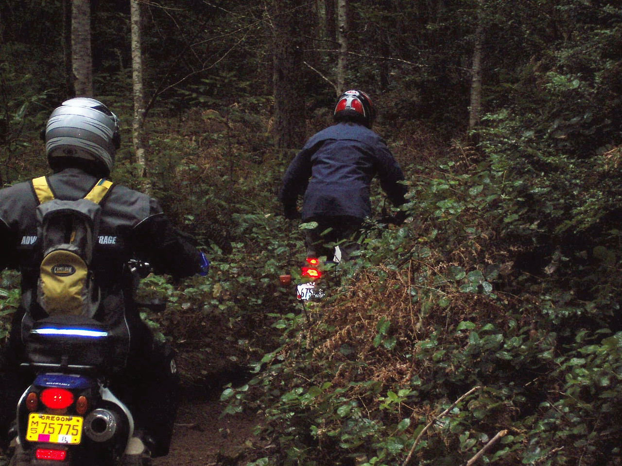 The Tahuya has some great single track trail riding. The ancient glacial sediments of rock and sand make it an ideal off road riding area.