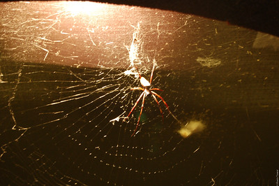 A big-ass spider.  And no glass to isolate it from the guests.