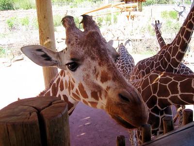Zoo - May 2006