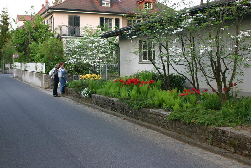 Neighbors and tulips