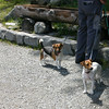 Dogs at the top of the Reichenbachfalls-Bahn funicular