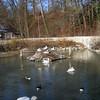 Pelicans at Tierpark