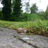 "We have lots of snails and slugs here.  This shot makes a nice wallpaper if set for ""Centered""."