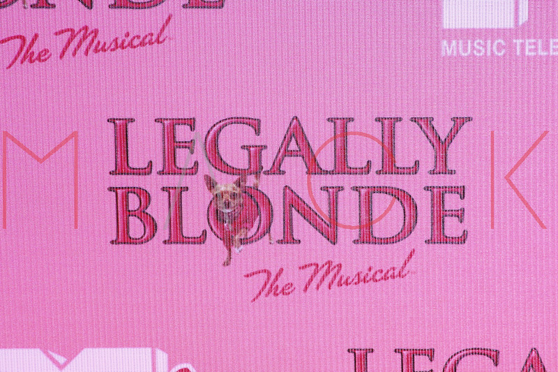 taping of Legally Blonde The Musical, New York, USA