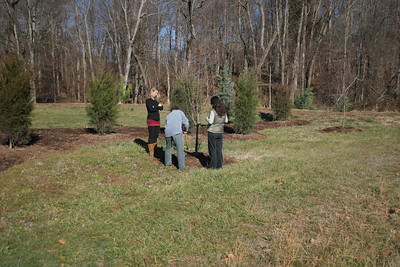 The Ferrys' newly planted lot