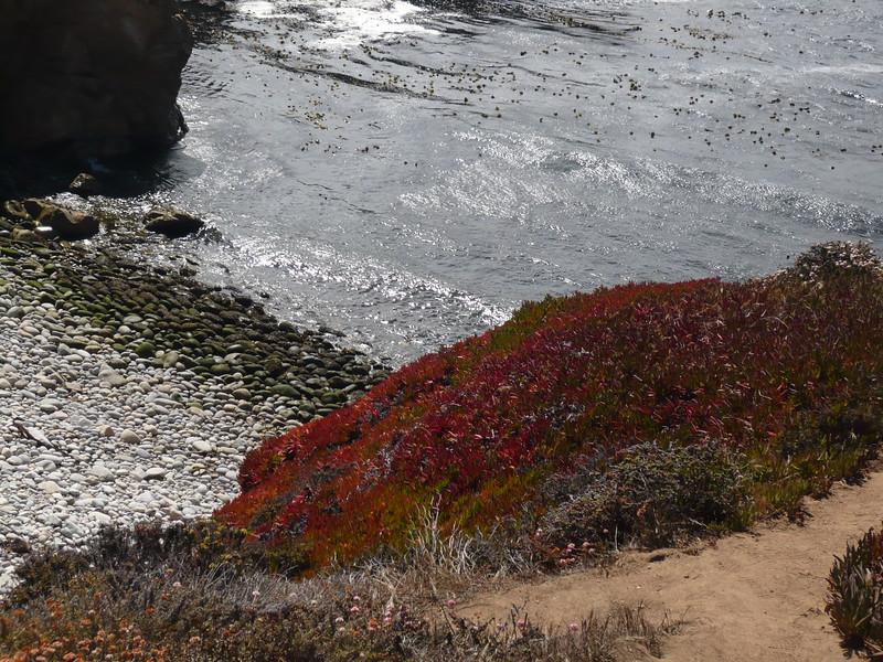 Colorful Beach foliage along Big Sur beaches.