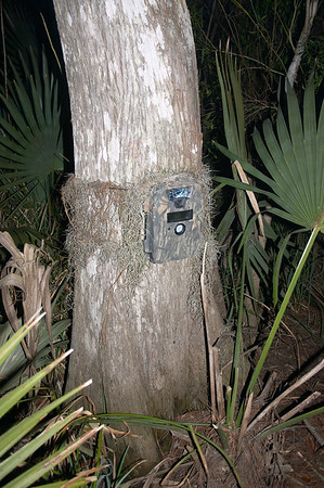 A wildlife camera. What's it looking at?