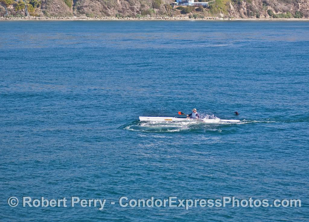 Eschrichtius robustus blasts kayaker 2007 02-17 Santa Barbara--010