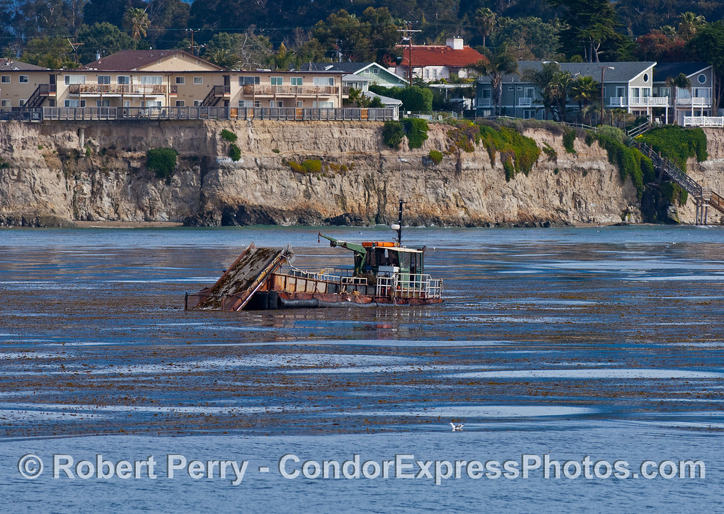 vessel dredge barge Ocean Harvest at work Macrocystis 2007 03-04 SB Channel-d-005
