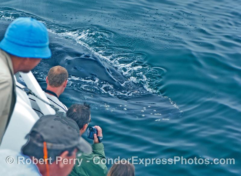 Friendly humpback