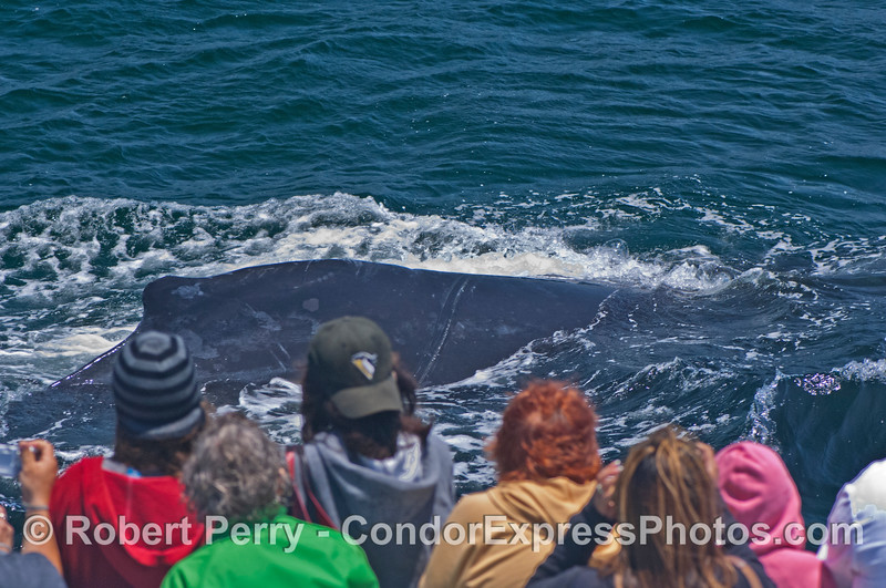 A very friendly visit by a humpback whale.