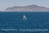 A blue whale spouts with West Anacapa Island in the back.