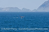 A blue whale shows its flukes with Frenchy's Cove, Anacapa Island in the back.