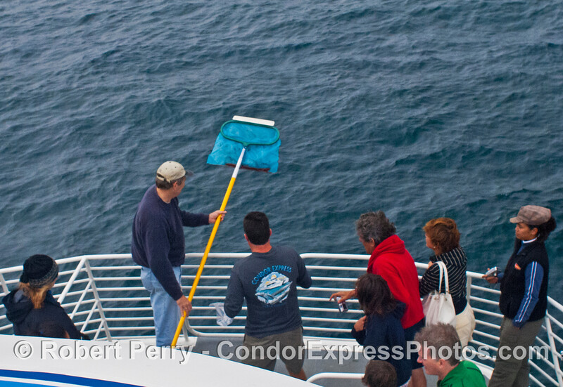 I stowed my pool net on board to collect live krill samples.  The next thing I know it was being used to scoop whale poop for the kids at the Cabrillo Museum to look at.