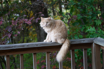 My lease doesn't allow me to have pets, but if a neighborhood cat decides he likes to hang around on my porch, that's his decision
