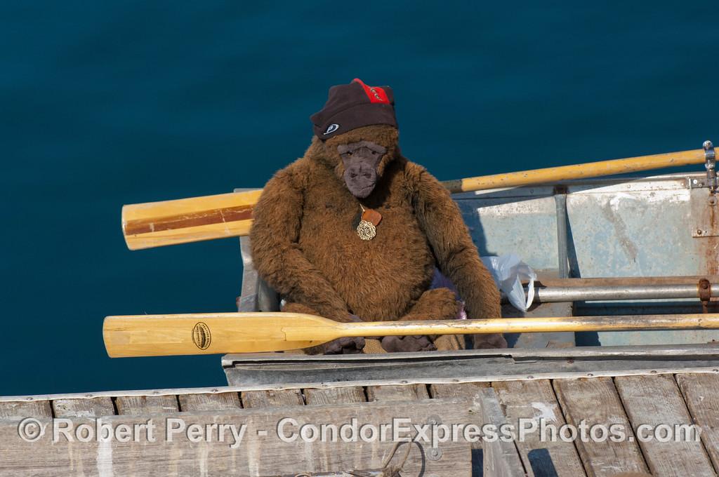 Gorilla in skiff 2007 11-10 SB Harbor--101