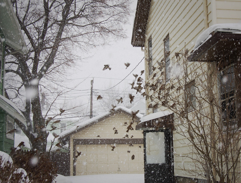 Scaring the Chickadees