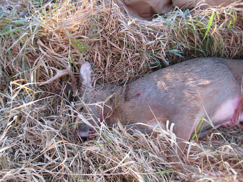 Another of Justin\'s buck.