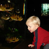 The cichlids watch Aaron