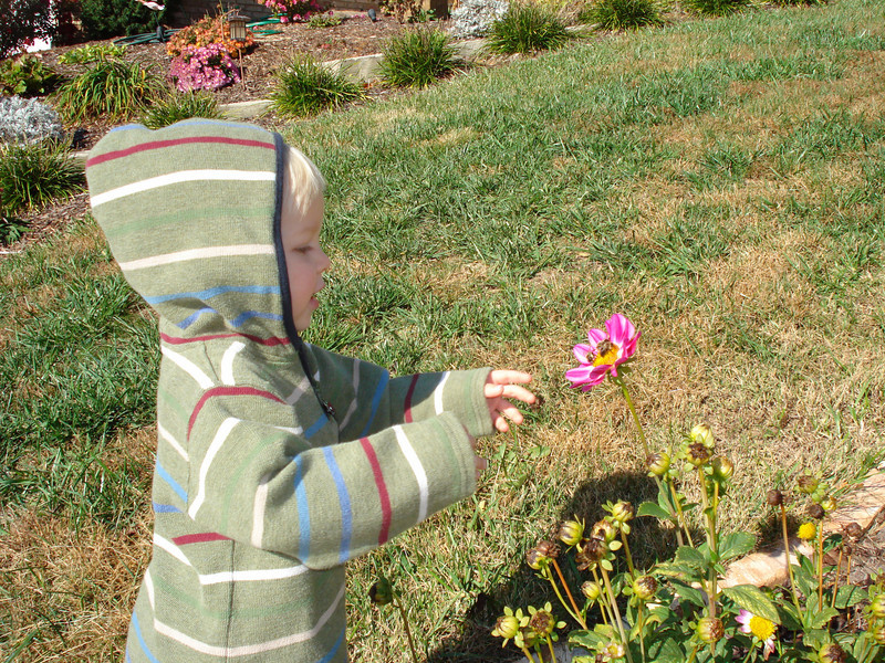 """Aaron is learning about bees.  """"We can look but do not touch."""""""