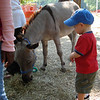 Petting Zoo at Fall Festival.