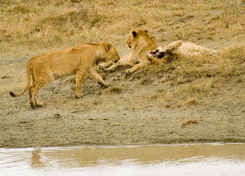 Three males relaxing after crossing