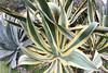 Angel Island - 071202 051