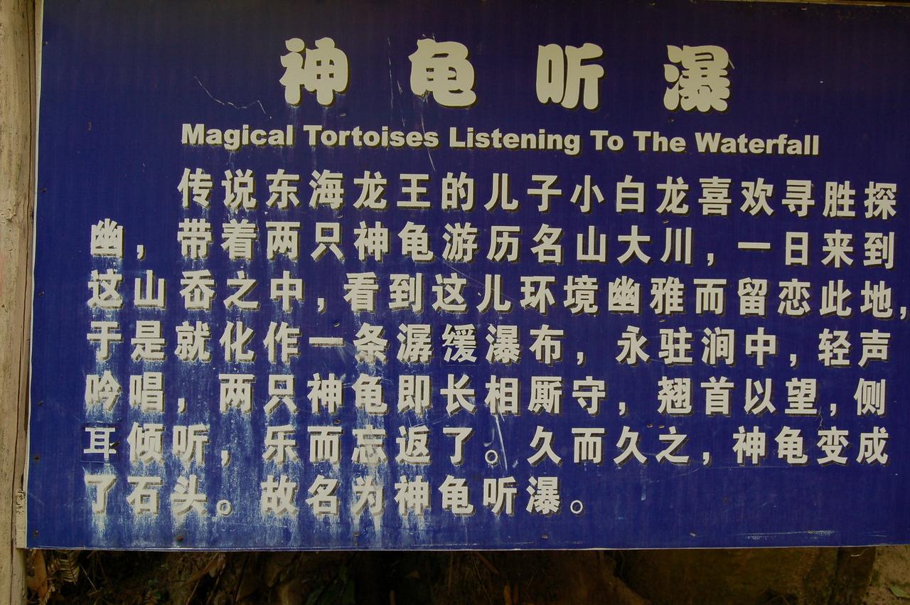 Magical tortoises