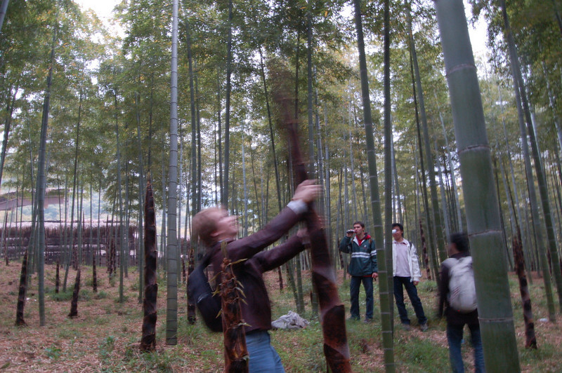 Waving bamboo